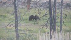 Bear, Copyright Michael Bencik 2010
